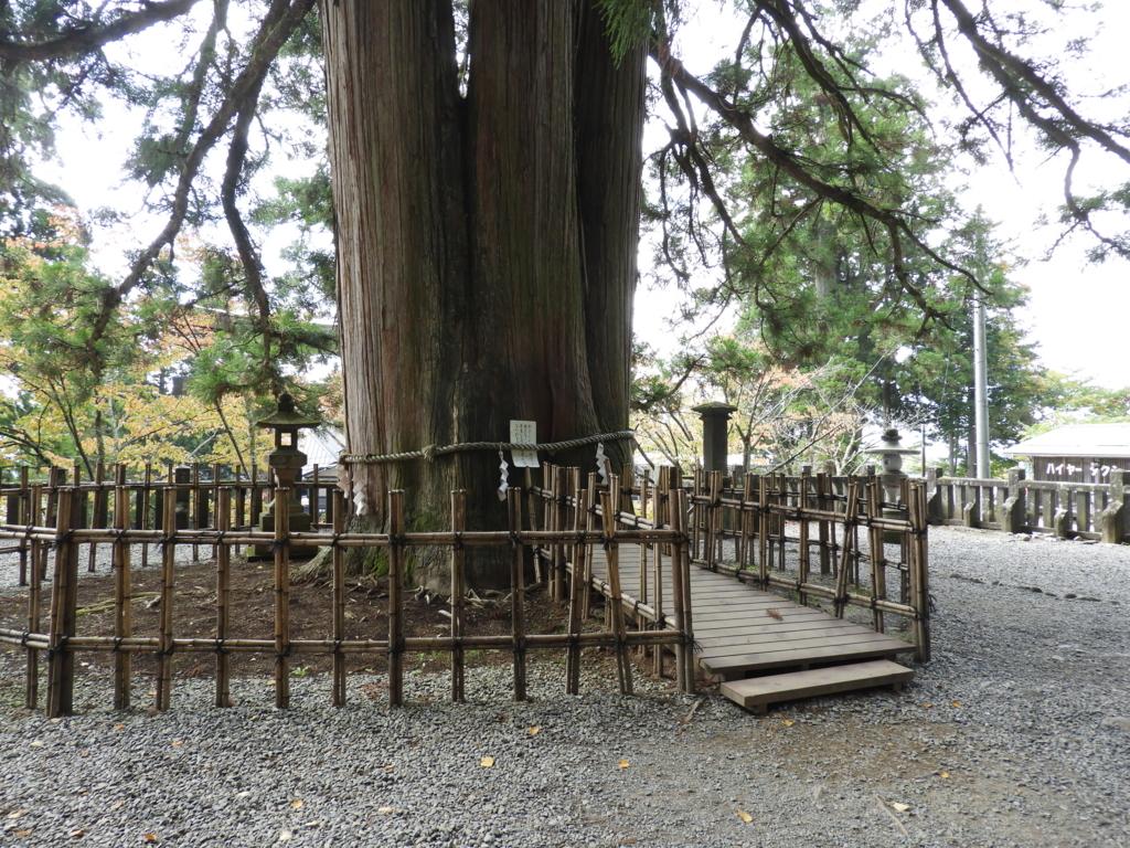 戸隠神社中社の三本杉の内の「い」の杉の裏側。大勢の人が触るため表面がツルツルになっている。