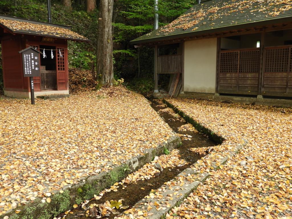 落ち葉の間を流れる水路