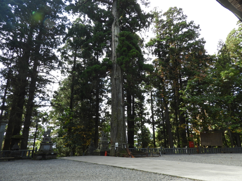 樹齢約700年の御神木