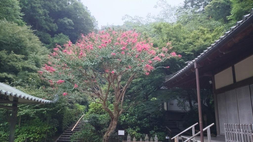 明月院の本堂の前で咲いていた花