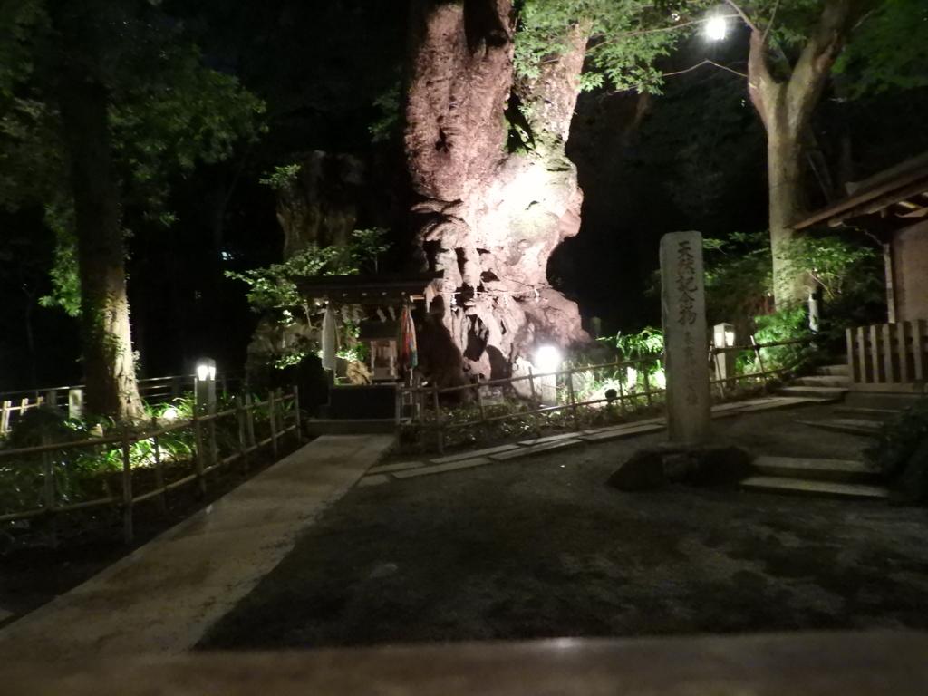 夜間にライトアップされた来宮神社の大楠