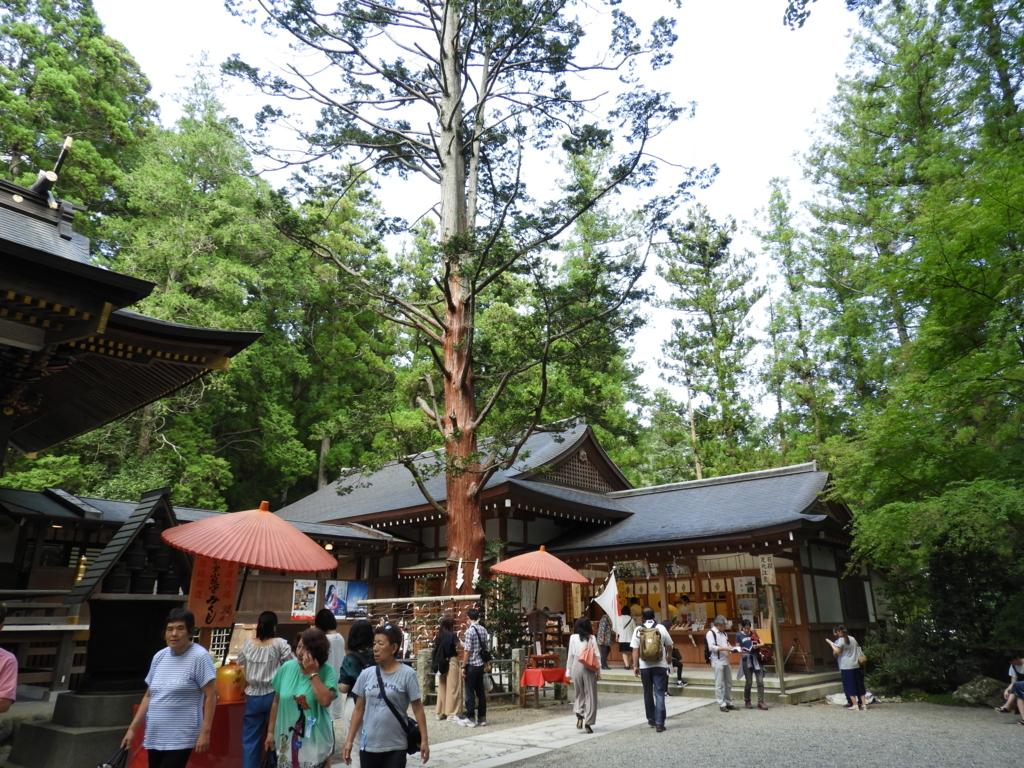 宝登山神社の御神木
