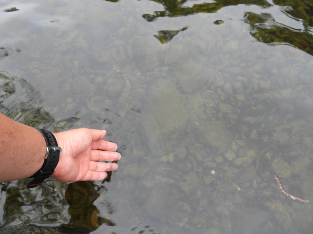 五十鈴川の清流に浸された左手