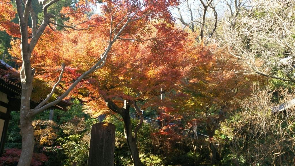 長谷寺の経蔵付近の紅葉