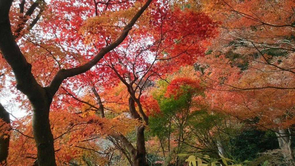 覚園寺の紅葉