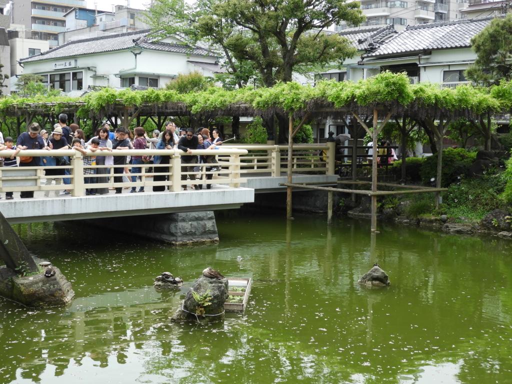 亀戸天神社の心寺池