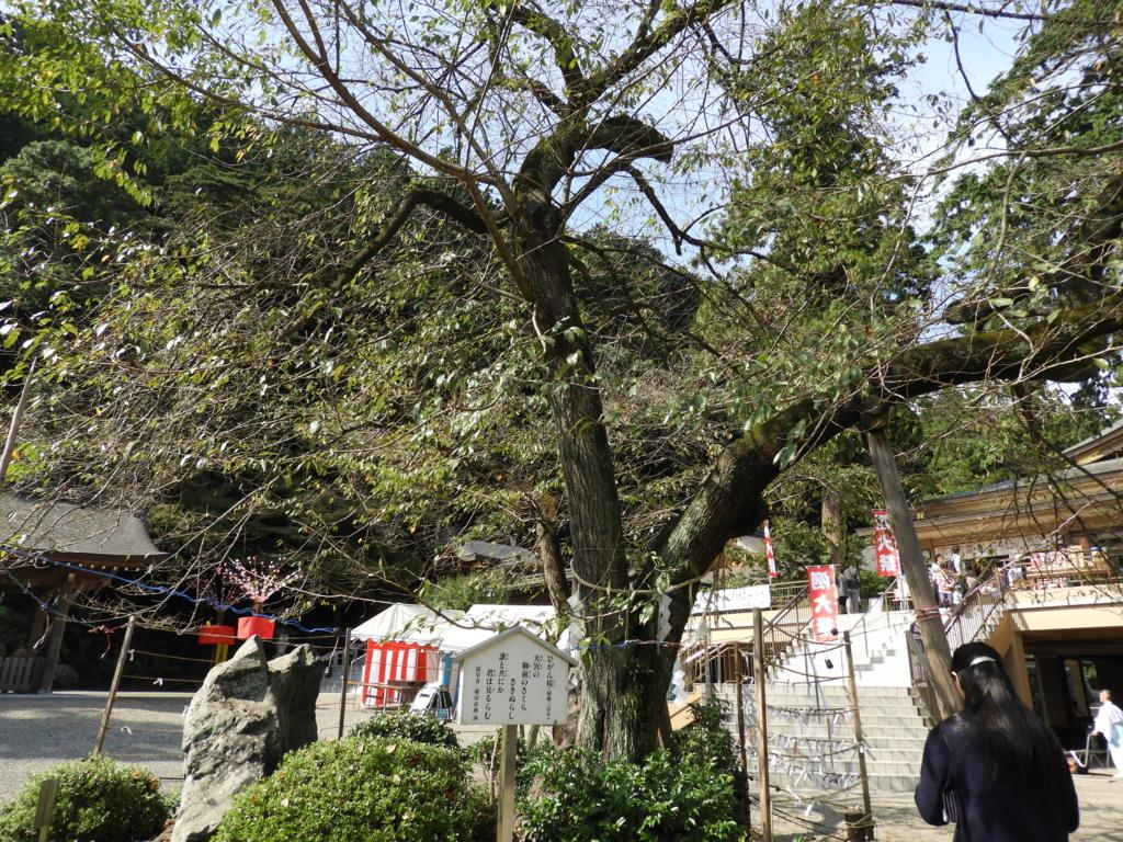出世のパワーが強い場所にある高麗神社の御神木