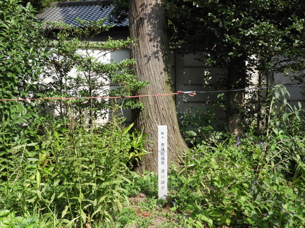 高麗神社に残る濱口雄幸の献木