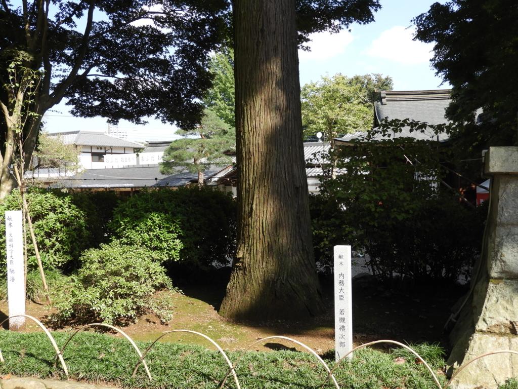 高麗神社に残る若槻禮次郎の献木