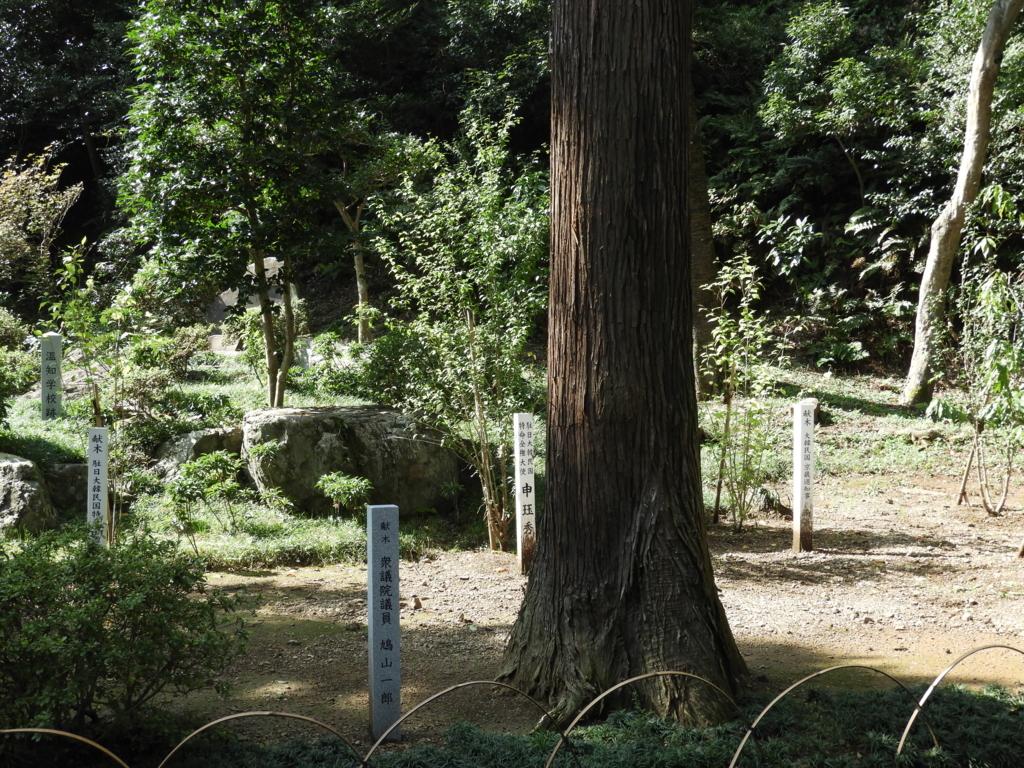 高麗神社に残る鳩山一郎の献木