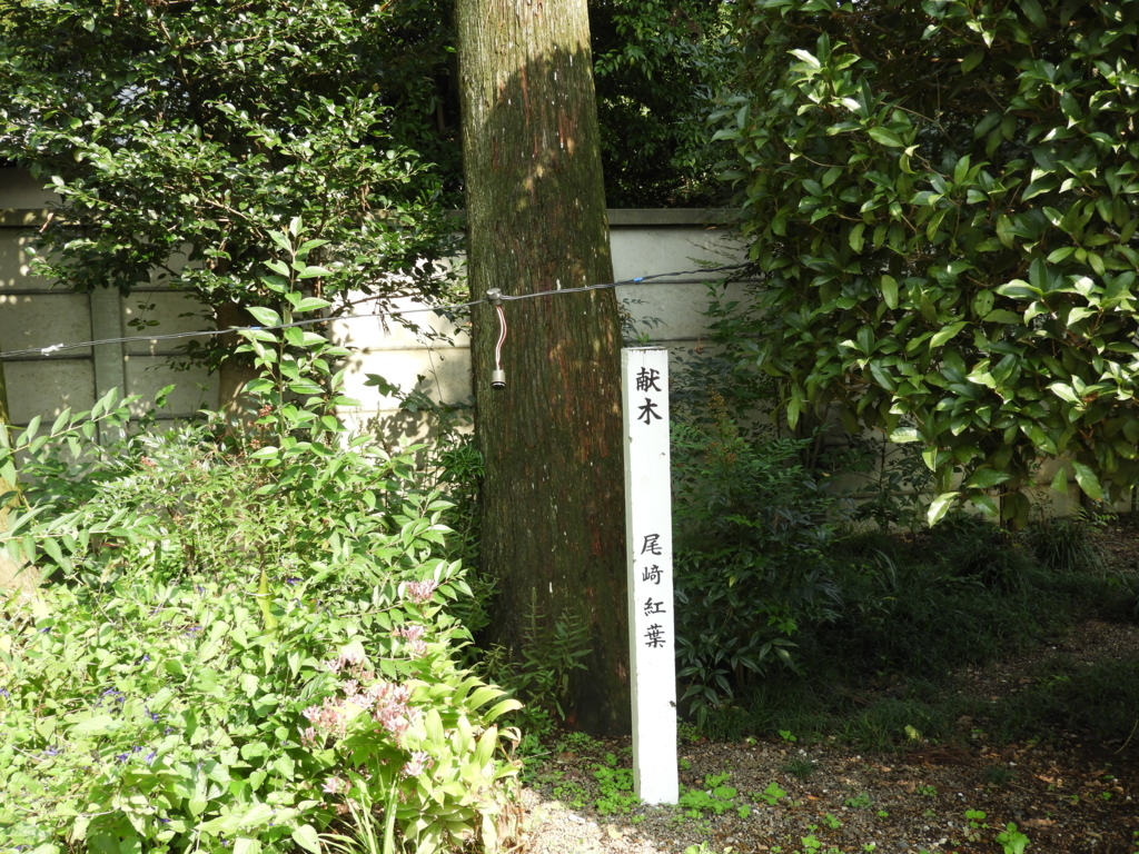高麗神社に残る尾崎紅葉の献木