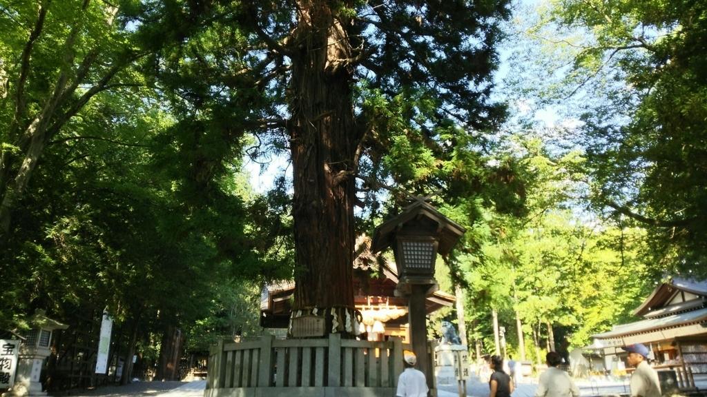 諏訪大社下社秋宮の寝入りの杉