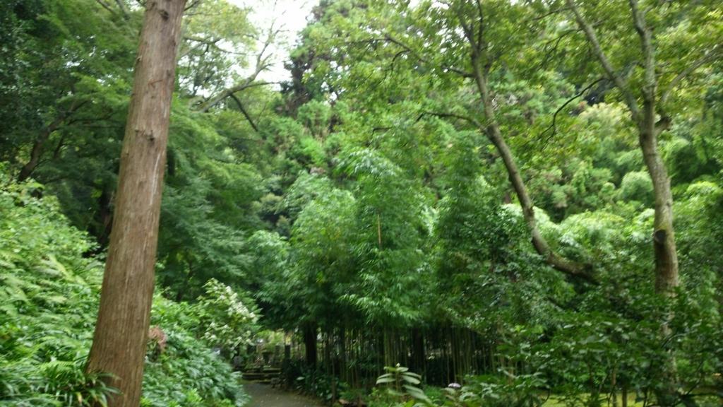 森に囲まれた浄智寺の境内