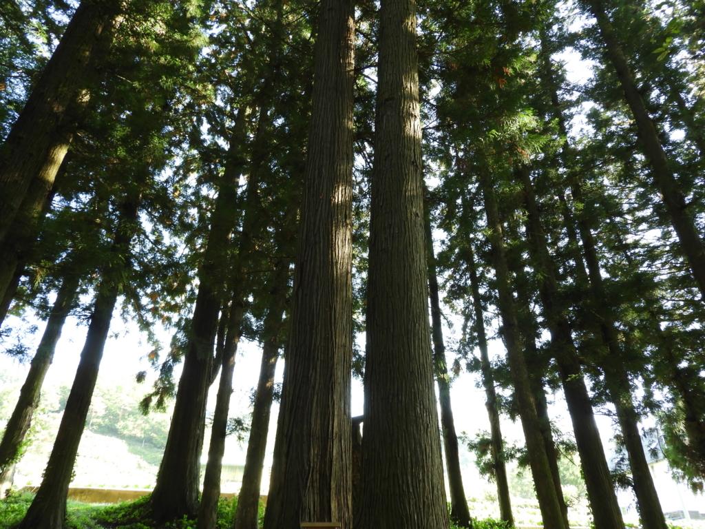 山家神社の結びの杉