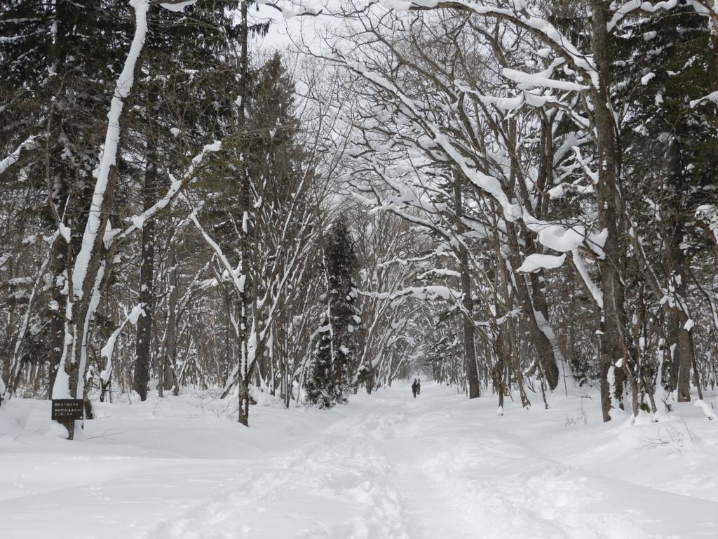 分厚い積雪に覆われた戸隠神社奥社への参道