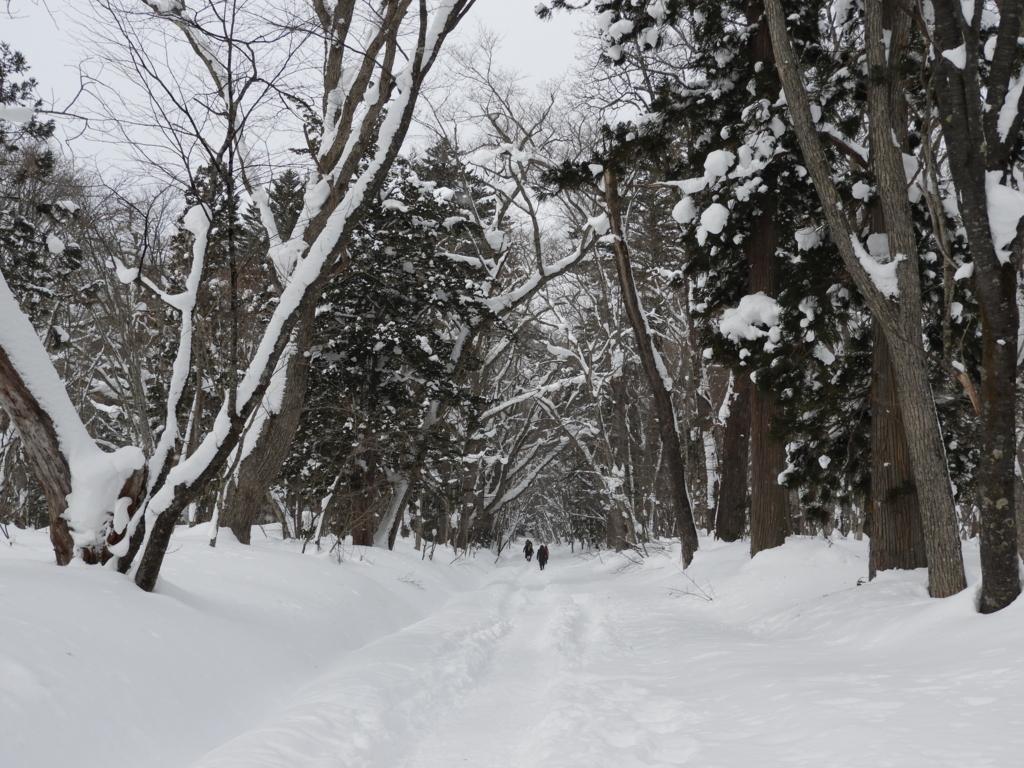 雪がしっかりと踏み固められた戸隠神社奥社への参道