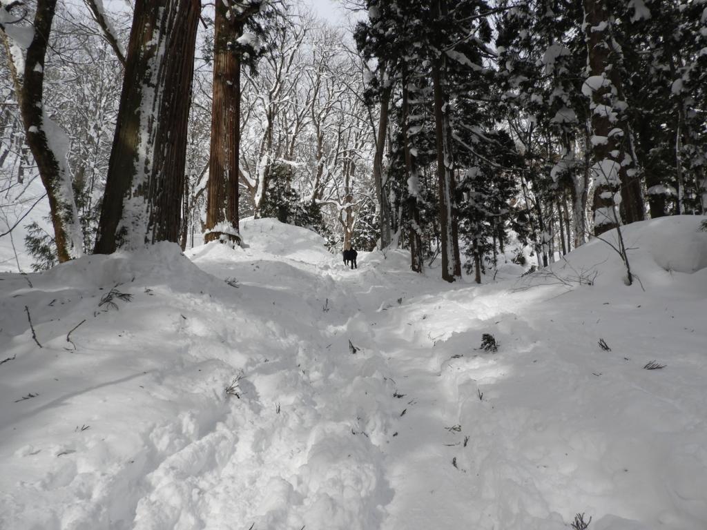 戸隠神社奥社参道の雪深い急斜面