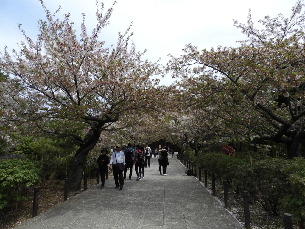 総門から三門まで続く建長寺の「桜のトンネル」