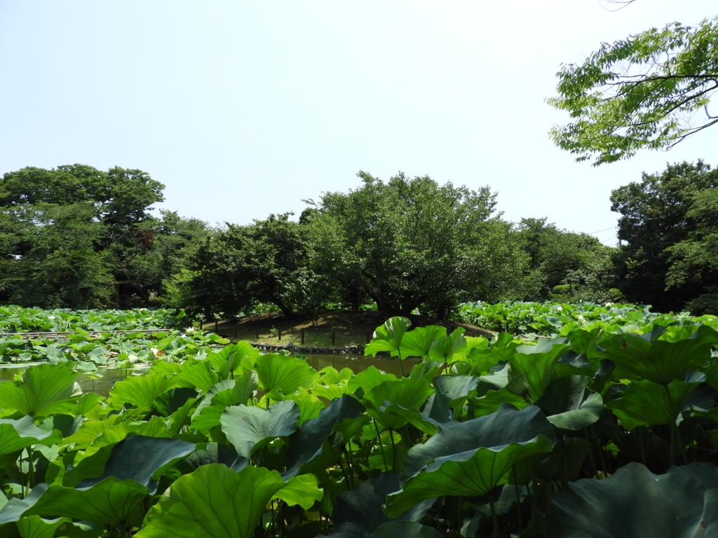 鶴岡八幡宮の源氏池