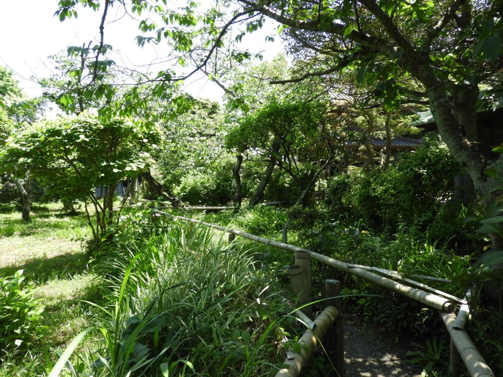 英勝寺の緑でいっぱいの境内