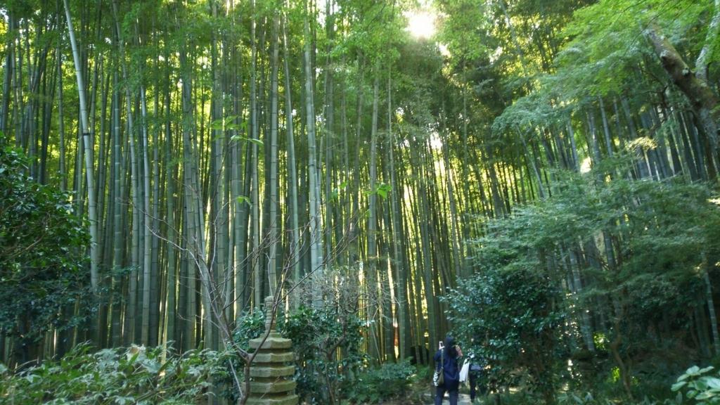 ミシュラン三ッ星の報国寺を訪れる大勢の人の目的である竹林