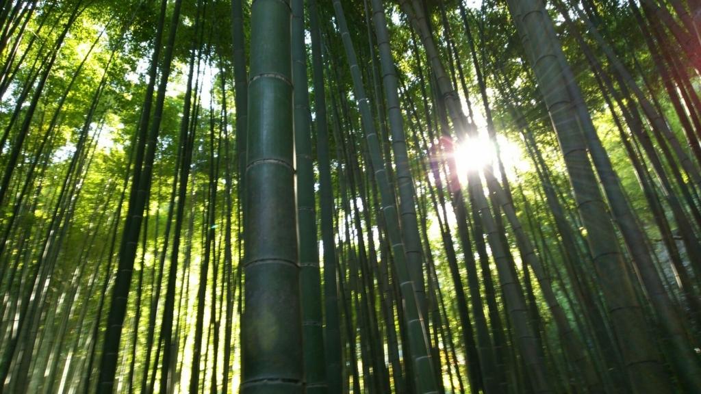 孟宗竹が生い茂った竹林