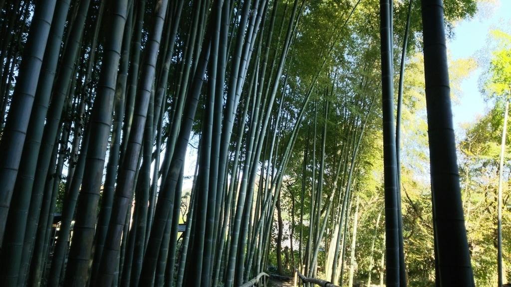 報国寺に匹敵する英勝寺の竹林