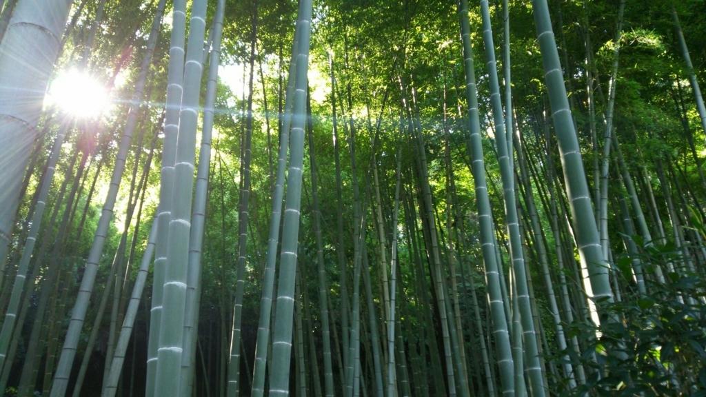 大変に見事な英勝寺の竹林