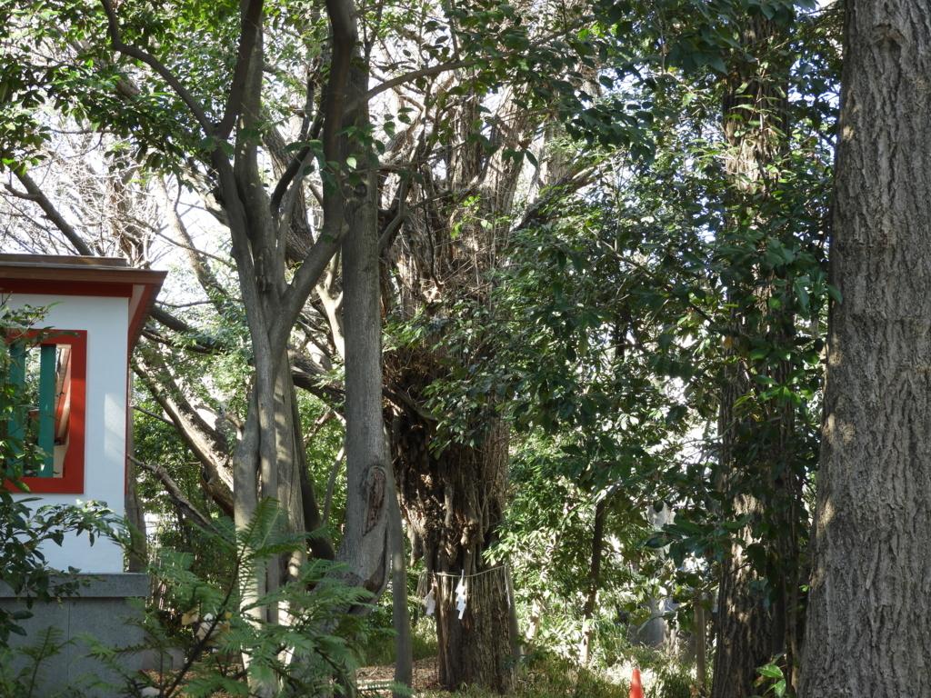 本殿の奥にある富岡八幡宮のご神木