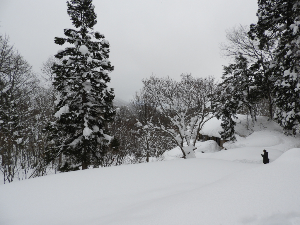 達成感を感じた戸隠神社奥社の光景