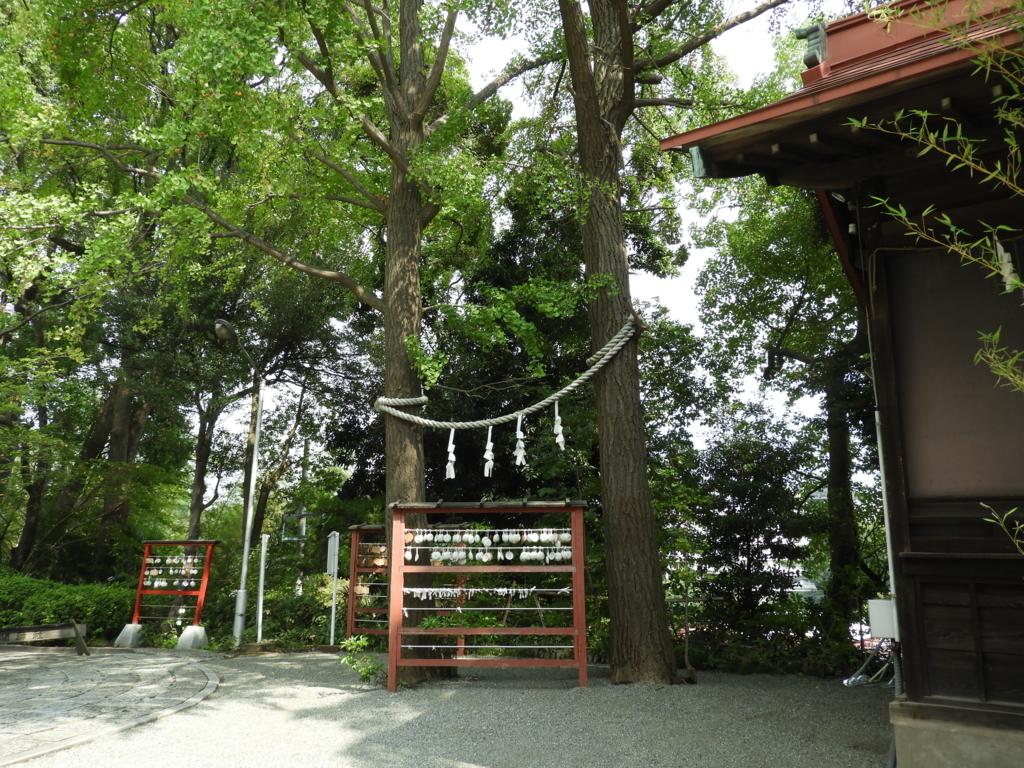 多摩川浅間神社のご神木