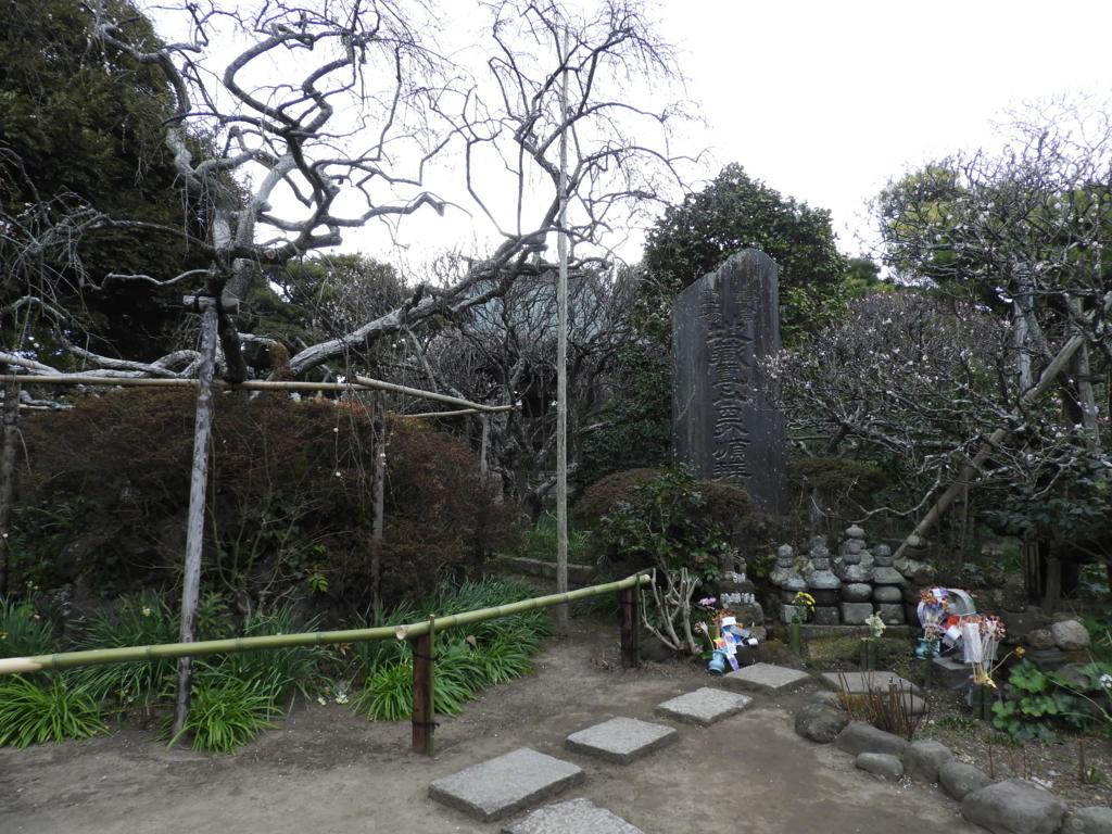 満開になると実に見事な宝戒寺の枝垂れ梅