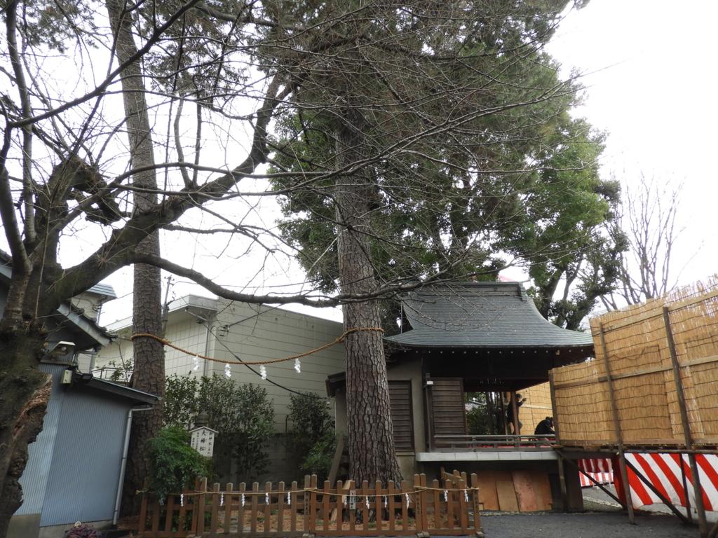 樹齢400年の黒松が2本そびえる御嶽神社の夫婦松