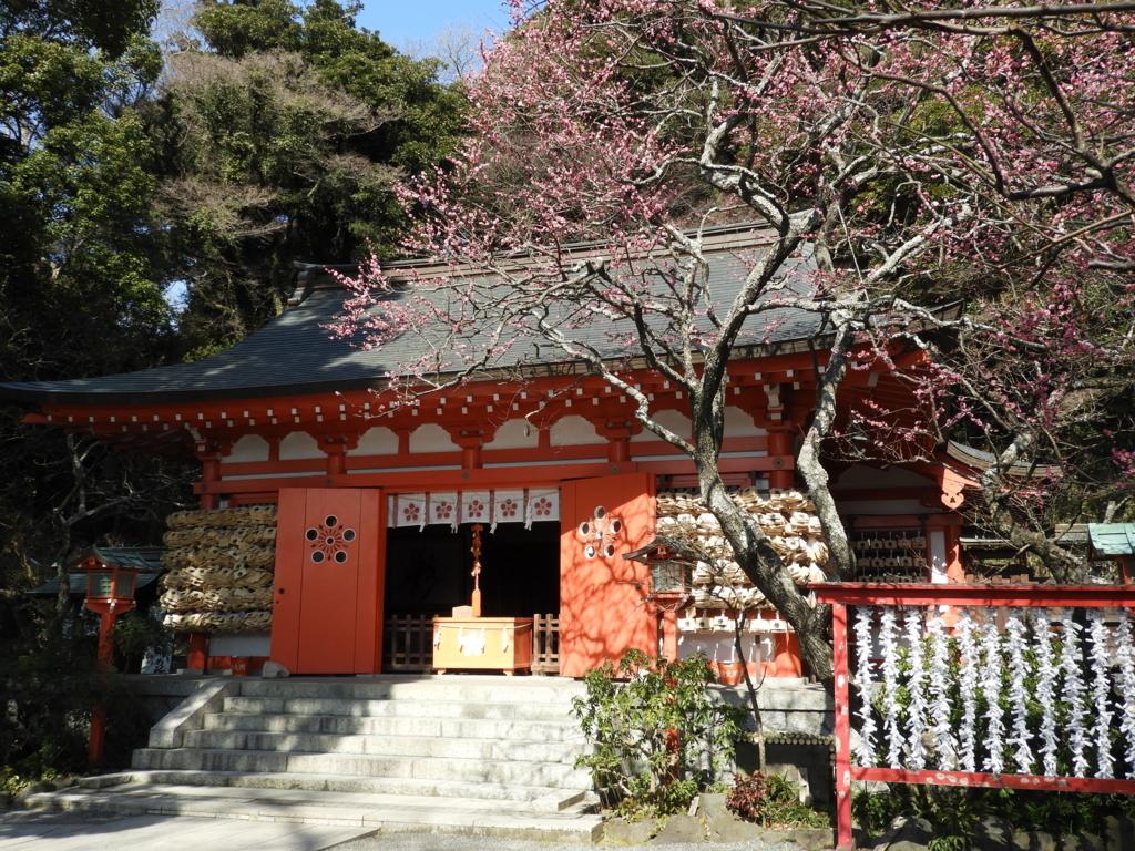 紅梅の奥に見える拝殿