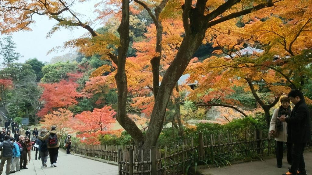 円覚寺舎利殿付近の紅葉