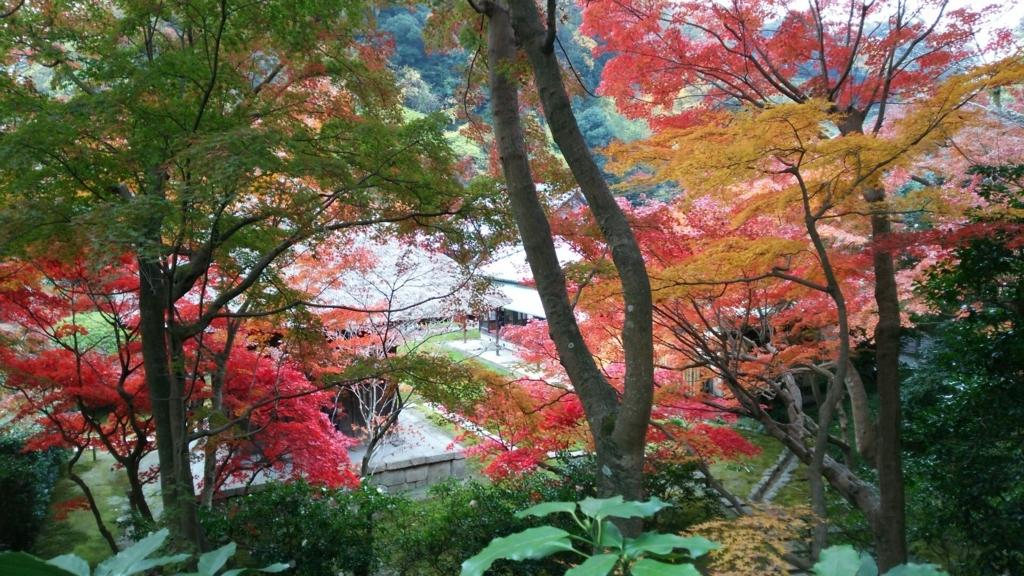 長寿寺庭園の全景と紅葉