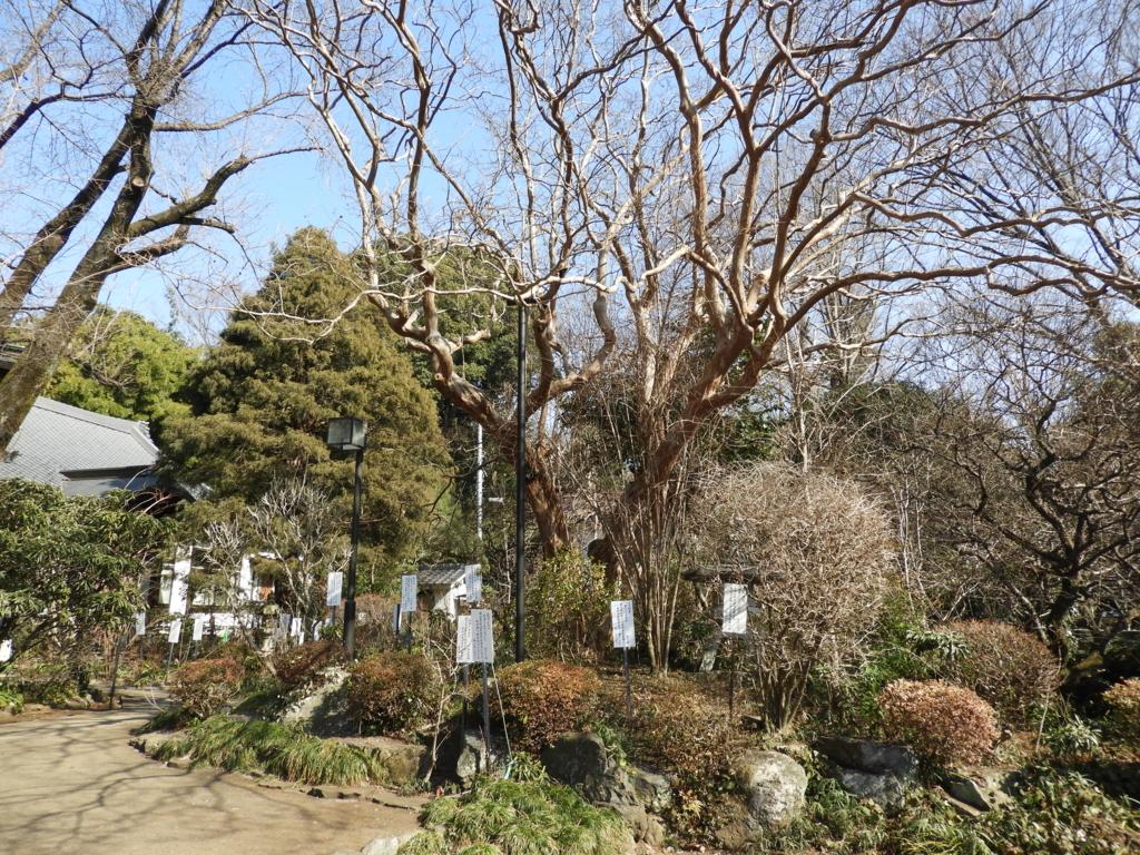 武蔵国分寺の万葉植物園