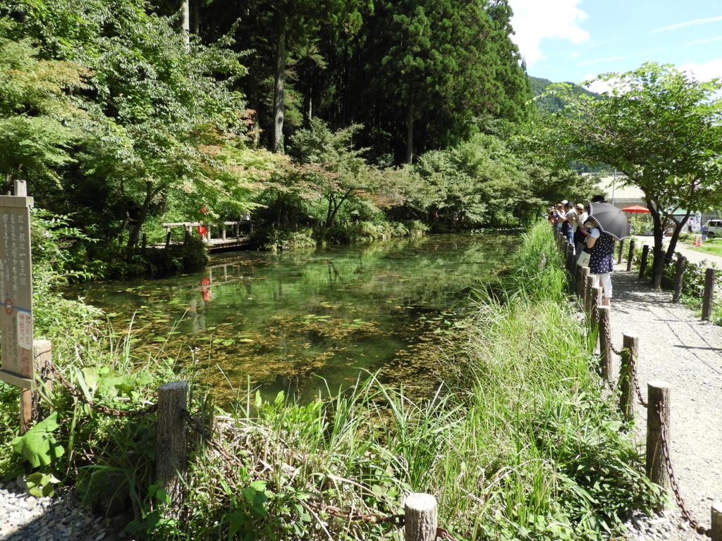 モネの池の全景