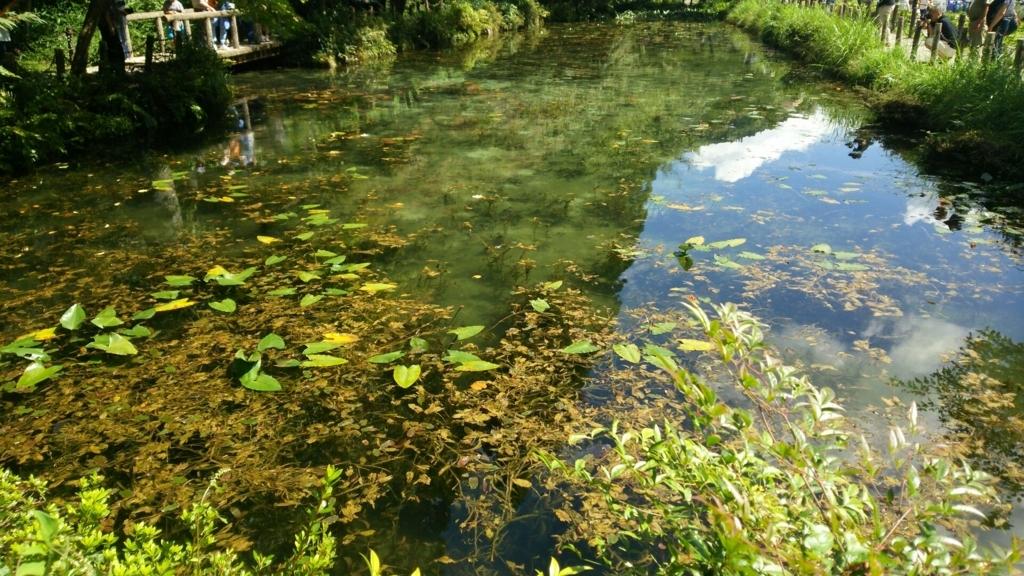 一番手前から見たモネの池