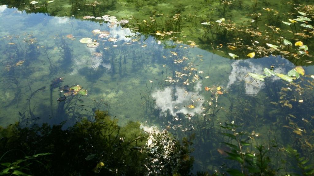 木の間から見たモネの池