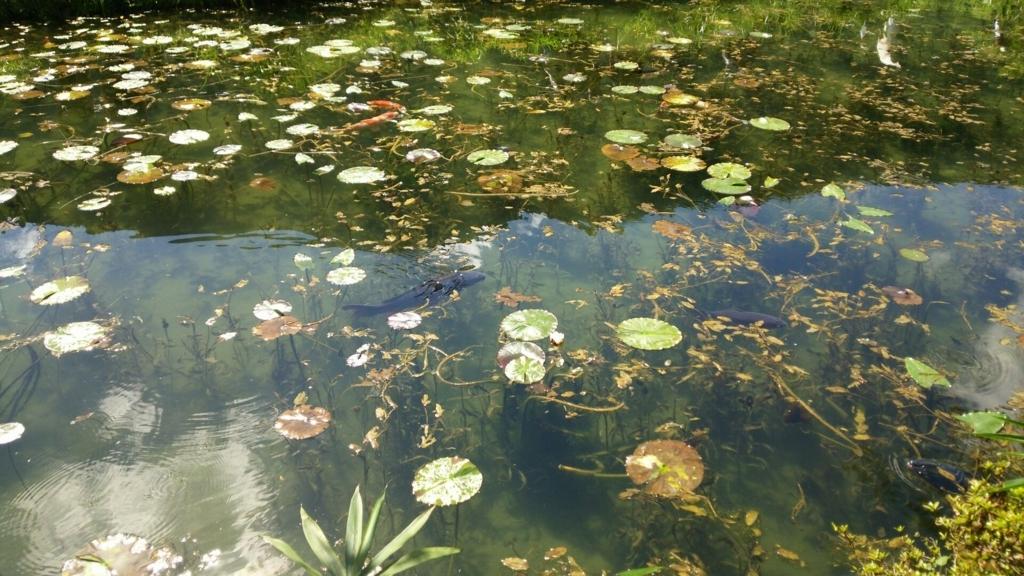 さらに奥から撮ったモネの池