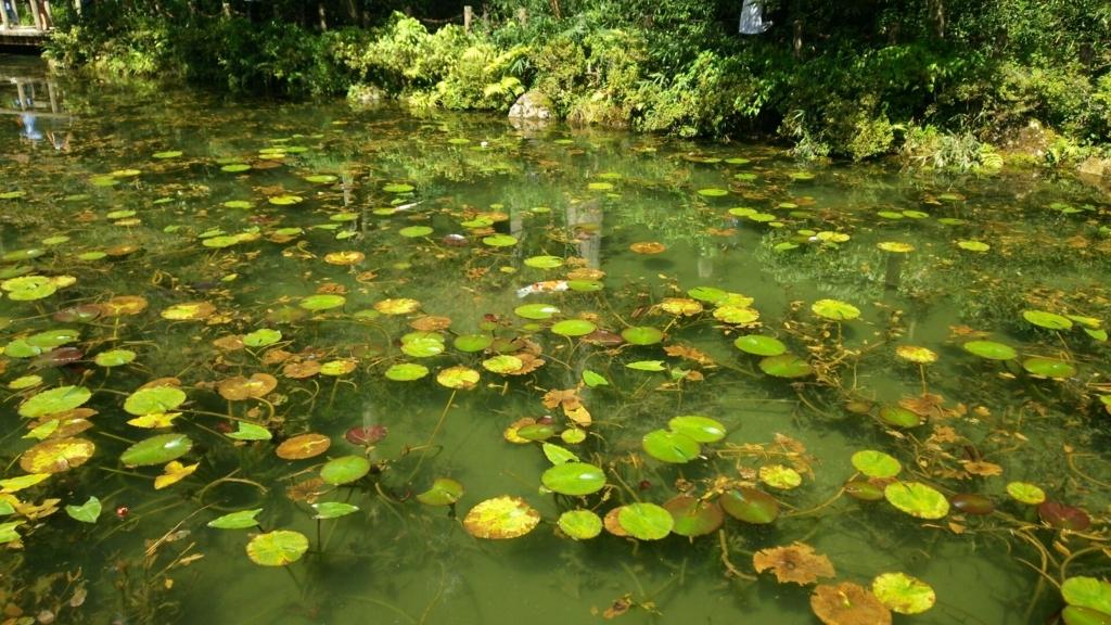 イメージが違ったモネの池