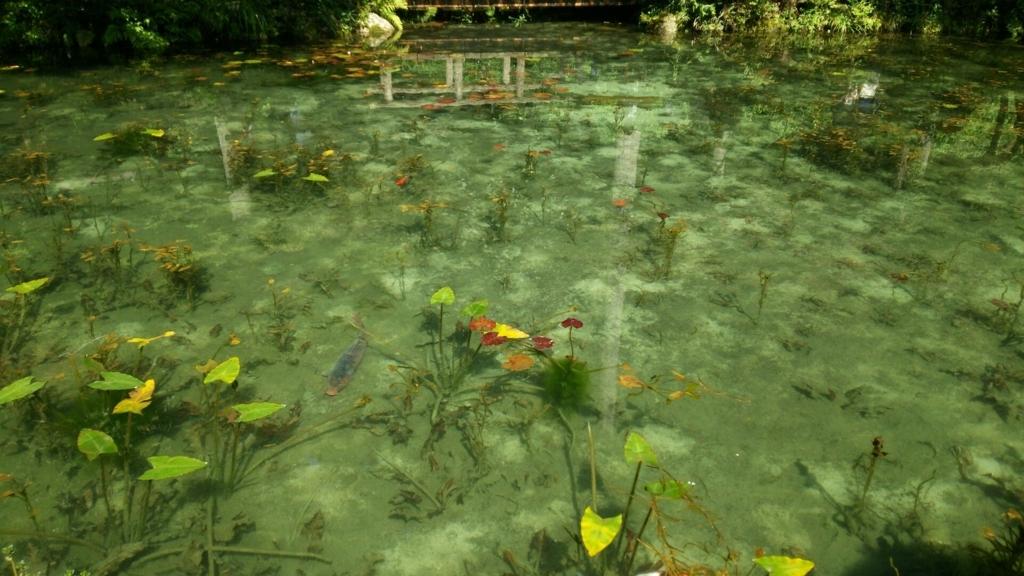 道路側から撮ったモネの池