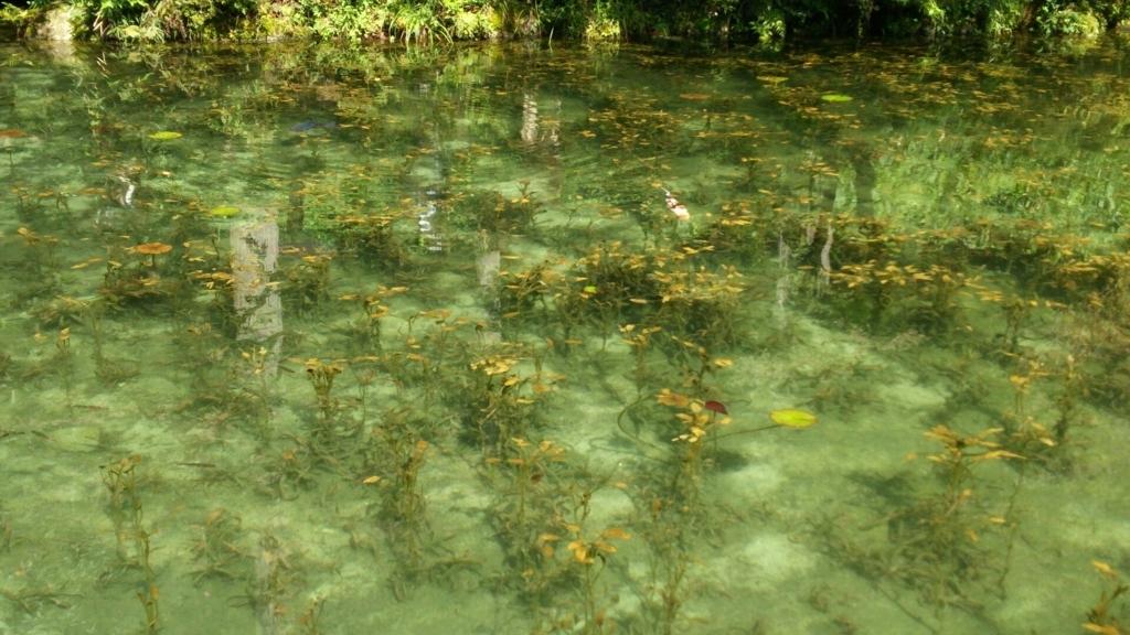 イメージに近いモネの池