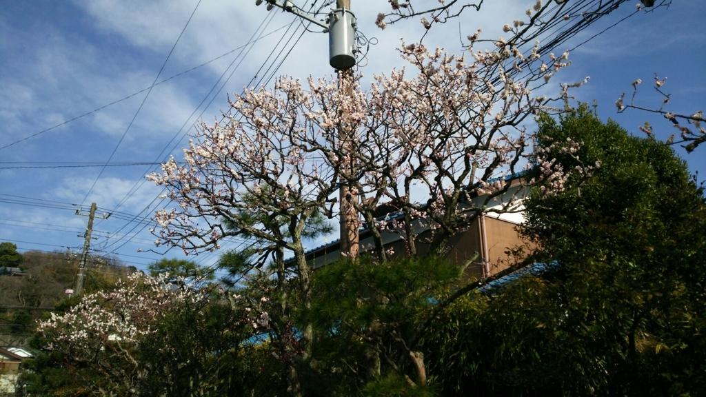 見頃になった東慶寺境内の花