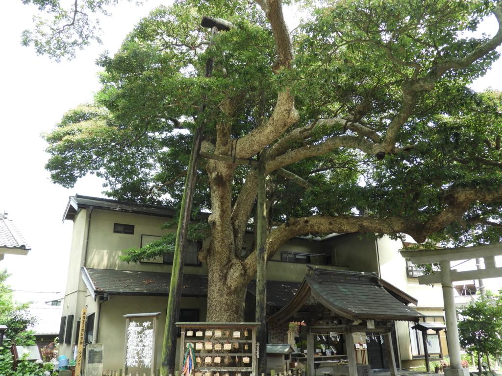 御神木の「たぶの木」