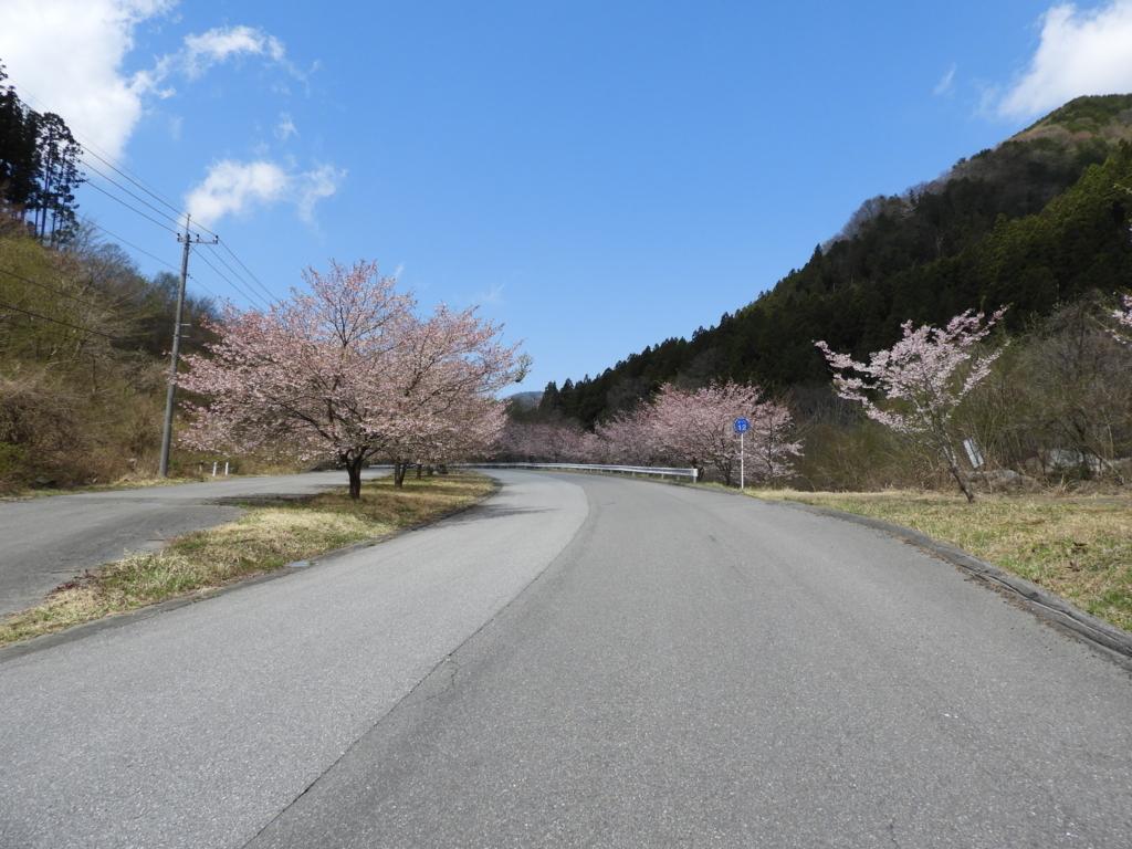 道中で咲いていた桜