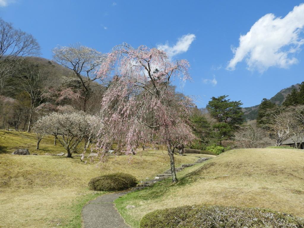 古峯園の美しい桜