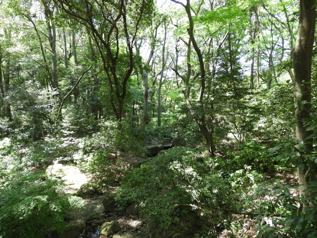 うっそうとした明治神宮の森