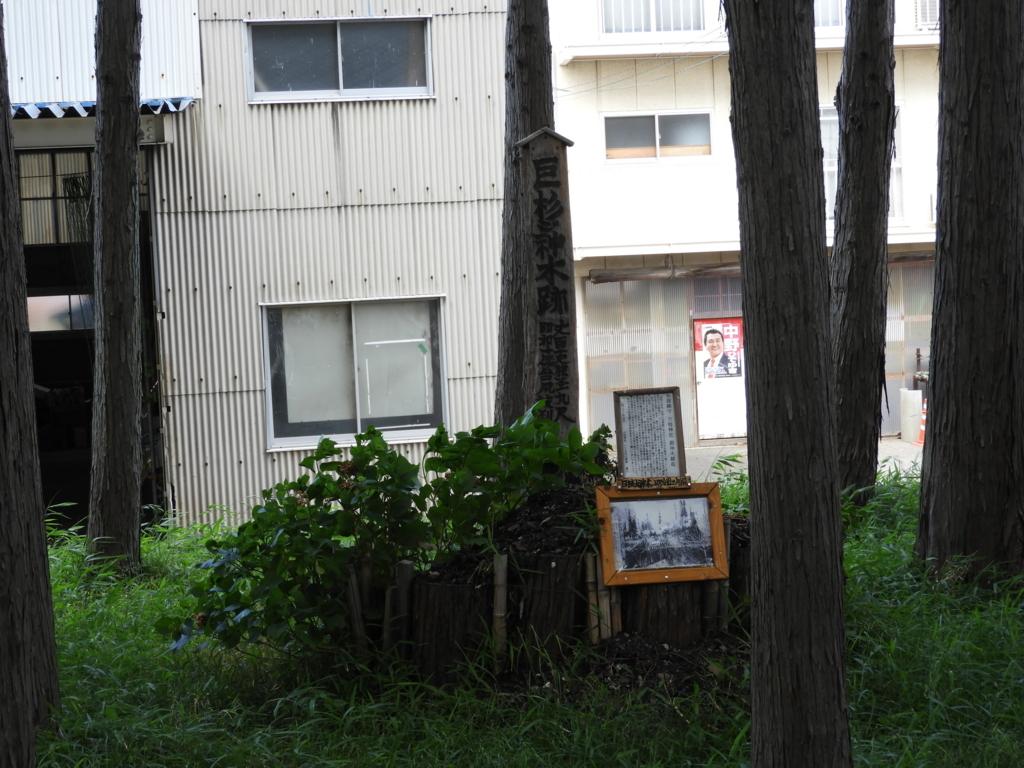 杉の巨木の跡地
